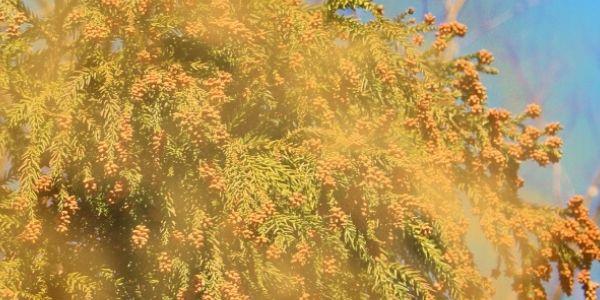 静電気が花粉を引き寄せる仕組み